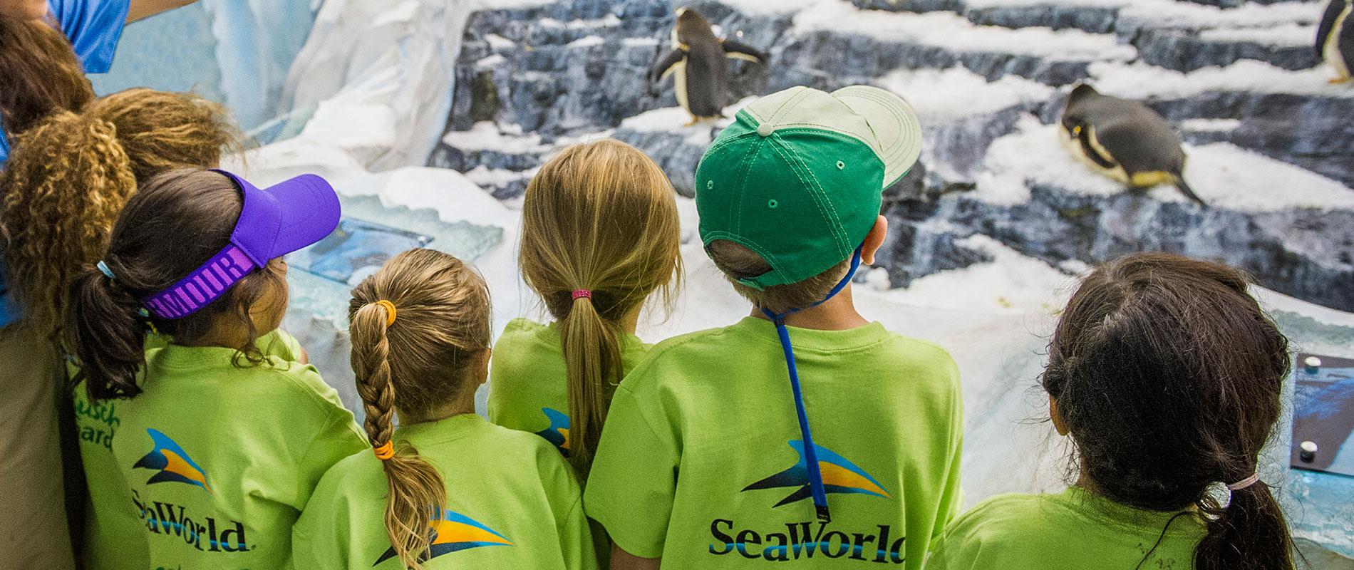 SeaWorld Orlando Summer Day Camps